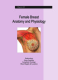 Female Breast Anatomy and Physiology
