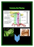 Introductory Crop Physiology